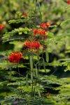 18092010_Scenic of Lingnan Garden00007