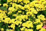 25032015_Hong Kong Flower Show00001