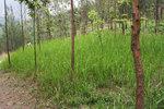 菁蔥綠草 IMG_2257