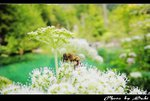 IMG_0577a