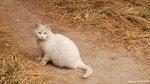 噢,這可愛的貓貓忽然跑出來了。