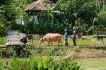 一位住客替牛拍照。