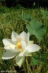 到處都是美麗的花兒。
