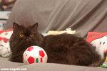 朱古力和牠的至愛玩具 — 「波波」。