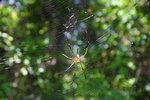 這條山路滿佈蜘蛛,這一隻已算是小型了…… ~_____~
