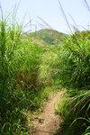 走到這兒,大家開始覺得不對勁。前面的路都滿是比我們更高的雜草,而且地上滿是濕滑的泥濘。行山經驗不足,又完全不熟地形的我們,當下決定--->放棄前往分流﹗
