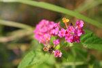 可愛的小野花