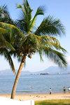 椰樹總給人悠閒的感覺。