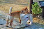 可愛的小狗 : )