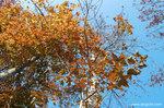 漫天紅葉,滿腦愁思