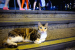DSC_0317-cat-aa