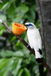 P6237540-bird-aa