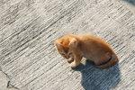 一到三家村村口便看到這隻小貓咪。更因牠而認識到兩位攝影之友呢﹗