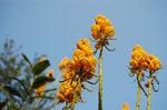 很喜歡這花兒的鮮黃色。