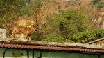 屋頂上的大狗。