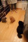 (由左至右)﹕曲奇、牛奶、朱古力,牠們正在開會商討對付鼠鼠的策略(還有一位議員「蛋糕」不願上鏡)。