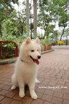 難怪西摩犬被稱為Smiling Dog,你看牠常常都像在跟你微笑的,看見牠便開心 ^_^