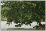 水尾村: 超大雨