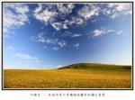晨光下的黃金草原
