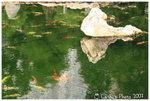 南蓮園池 - 錦鯉