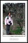 南京梅花山