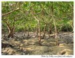 環保農場-紅樹林