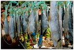 馬灣舊村 - 晒鹹魚