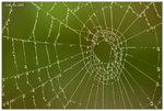 又係蜘蛛網