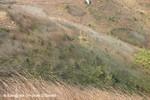 馬鞍山的草全都被強風吹向一邊生長! MaOnShan27Dec04_10026