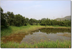 Wetland, Ho Sheung Heung (濕地-河上鄉)