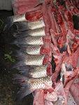Fish tail at Central Market's fish monger