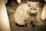 Cat 21-s-18