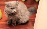 Cat 21-s-19