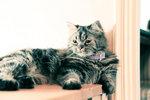 Cat 21-s-27