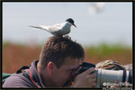 Farne Island 的雀真是多到無位企!!!!