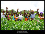 Singing and dancing @ soy bean farm @ Copperbelt, Zambia