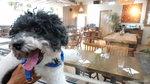 我地坐位後面玻璃所隔便是 Chill Inn 餐廳所在, 餐廳與狗狗大本營入口是分開的 20190824-019