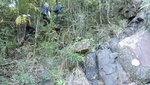 走壁左林中山路 DSC00024