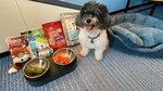狗狗禮物有零食, 有罐頭膳食, 還有玩具 20201029-009