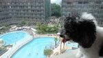 房間下望酒店泳池 20201029-022