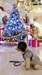 酒店附近的 Element 商場聖誕裝飾 20201218-022