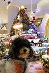 酒店附近的 Element 商場聖誕裝飾 20201218-025