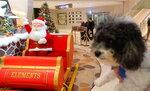 酒店附近的 Element 商場聖誕裝飾 20201218-027