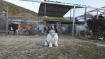 JK Club 露營車場內牧羊場 DSC02175