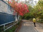 學校旁小徑 DSCN5759