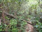 好樹不攔路, 枯樹, 無法啦 DSC04050