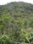 落至山坳位便要入林, 好密哩 DSC04108
