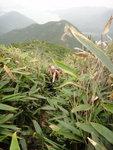 回望仍見金山尾, 山路兩望植物比人高哩 DSC04122
