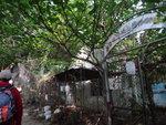 經己廢棄的三門仔新村漁類統營處 DSC04556