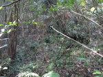 窮源離澗穿林上山 DSC04711